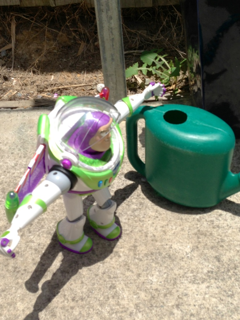 The plants needed a good water so I asked Buzz to give them a drink.