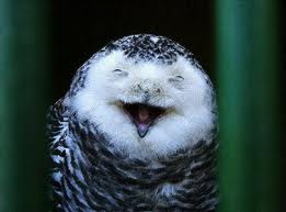 Totally know this isn't a hawk - but it's laughing so cut me some slack. Source: palestinerose.wordpress.com