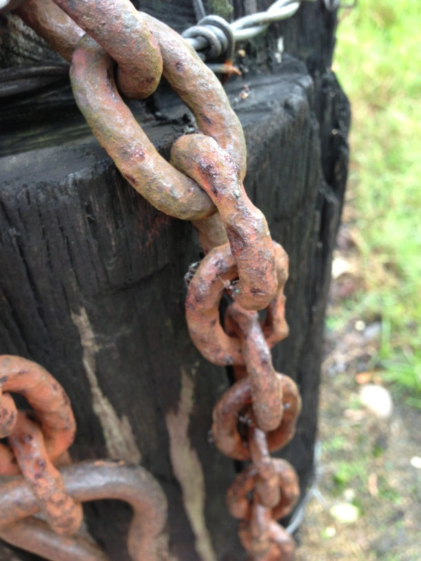 Rusted fence, bull ants crawling up latch and I made mum close this, because that's what mums do for their kids!!