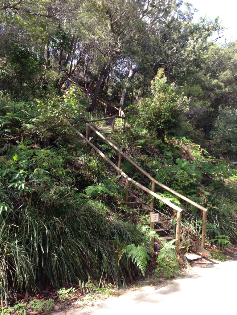 Some of the 220 steps we did up from the beach to our house. Then it was 220 down. THEY WERE TIRING!