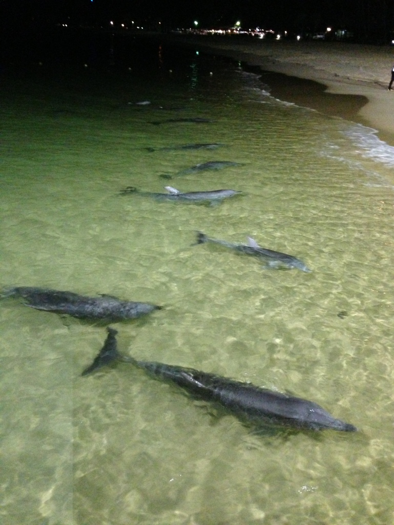 We had 10 dolphins come in for a feed, and two babies, just adorable.