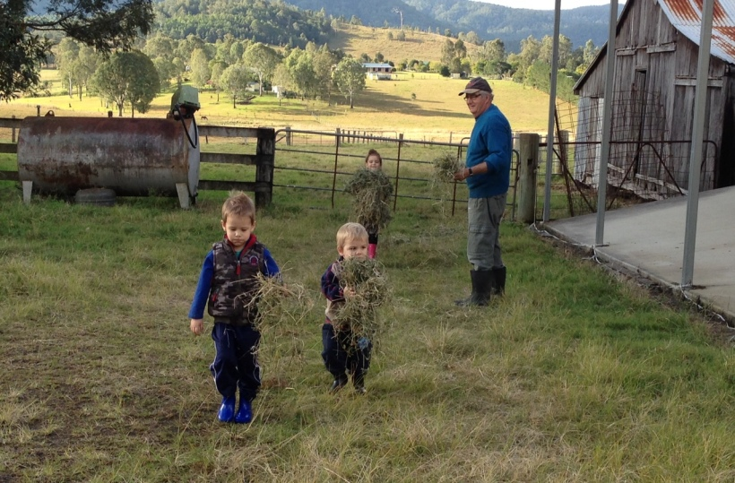 The kids LOVED getting some hay - except the younger two were too scared to actually give it to the cows :(